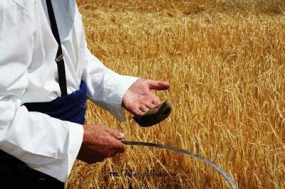 SITUACIÓN DE LA AGRICULTURA ARAGONESA