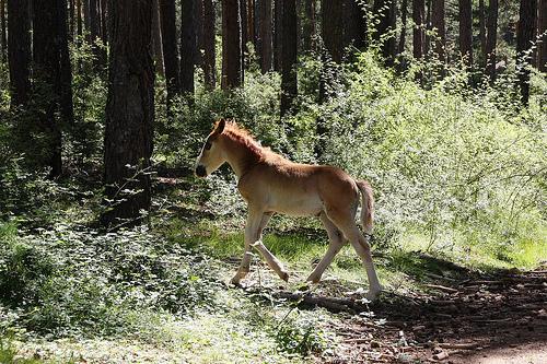 caballos por blogsergio.